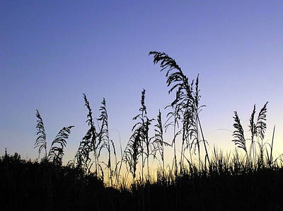 Photograph - Sea Oats In Silhouette  by John Myers