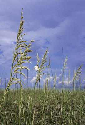 Photograph - Sea Oats Into The Clouds by Karen Stephenson