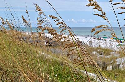 Photograph - Sea Oats by John Hintz