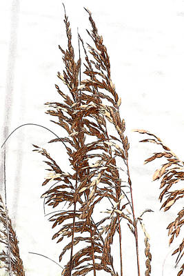 Photograph - Sea Oats by Jonah Gibson