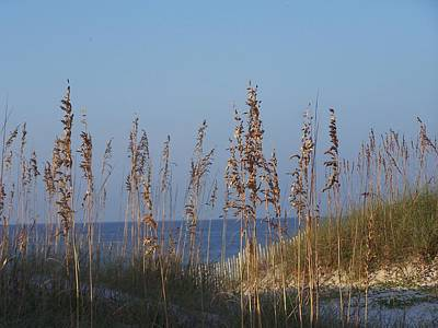 Art Print featuring the photograph Sea Oats by Michele Kaiser
