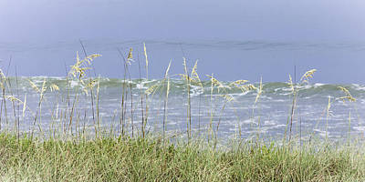 Photograph - Sea Oats Panorama 1 by Karen Stephenson