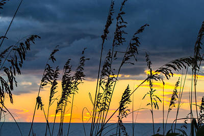 Photograph - Sea Oats by Shannon Harrington
