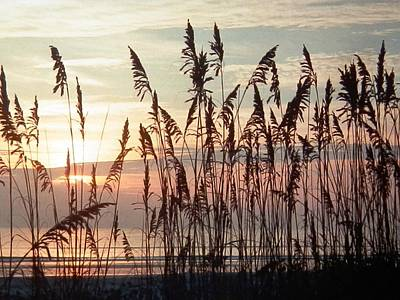 Photograph - Fabulous Blue Sea Oats Sunrise by Belinda Lee