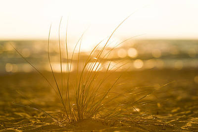 Sea Oats Sunset Art Print by Sebastian Musial