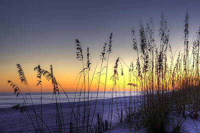 Pensacola Photograph - Sea Oats by Tim Stanley