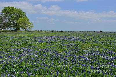 Colorful Photograph - Sea Of Blue by Hilton Barlow