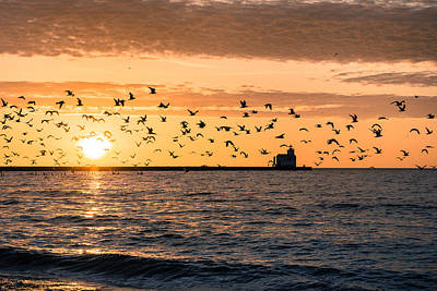 Photograph - Sea Of Gulls by Bill Pevlor