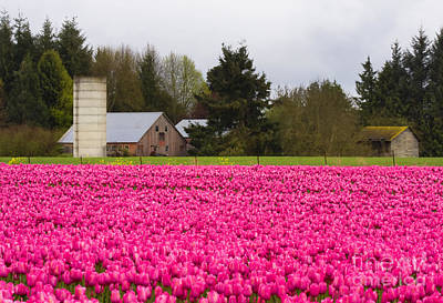 Skagit Photograph - Sea Of Pink by Mike  Dawson