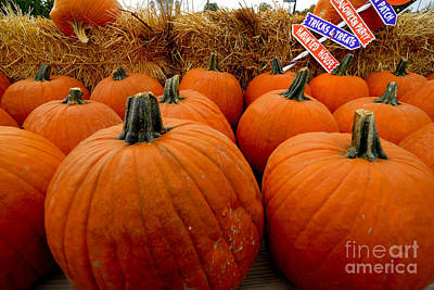 Sea Of Pumpkins Print by Amy Cicconi