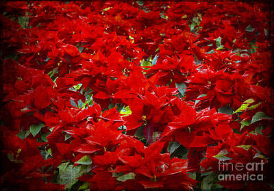 Photograph - Sea Of Red by Tamara Becker