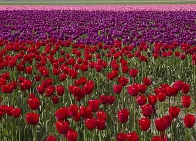 Sea Of Tulips Original by Elvira Butler