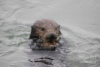 Otter Photograph - Sea Otter by George Battersby