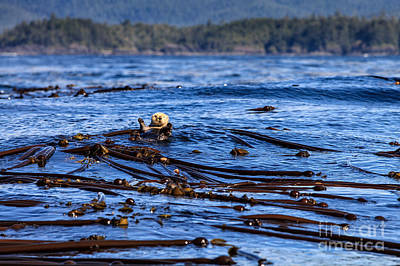 Photograph - Sea Otter Greeting by Stuart Gordon