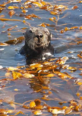 Photograph - Sea Otter by Lee Kirchhevel