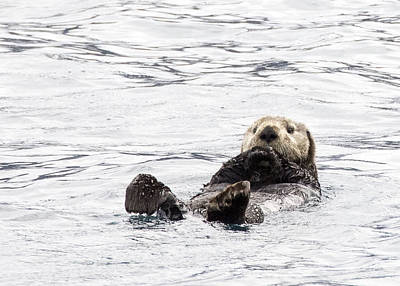 Photograph - Sea Otter by Saya Studios