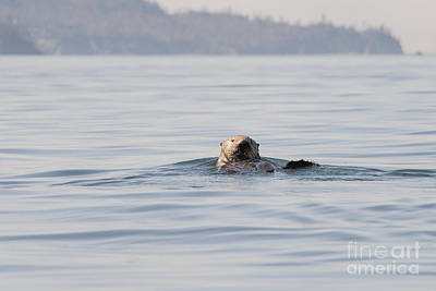 Photograph - Sea Otter With Fish Eating by Dan Friend