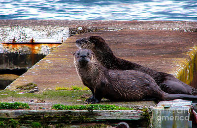 Photograph - Sea Otters by Robert Bales