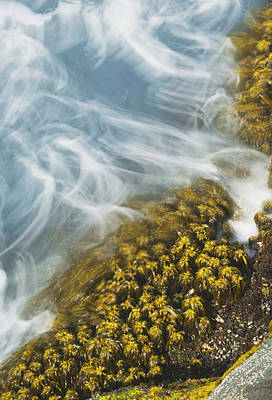 Large Group Of Objects Photograph - Sea Palm In Surf Cape Flattery by Kevin Schafer