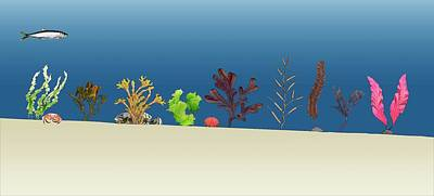 Sea Plants Art Print