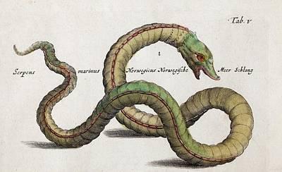 Naturalis Photograph - Sea Serpent by Paul D Stewart