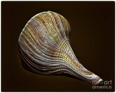 Photograph - Sea Shell 3993 by Walt Foegelle
