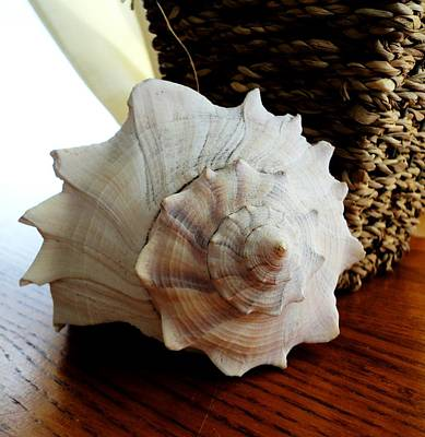 Art Print featuring the photograph Sea Shell And Basket by Yolanda Rodriguez