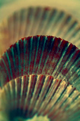 Sea Shell Art 2 Print by Bonnie Bruno