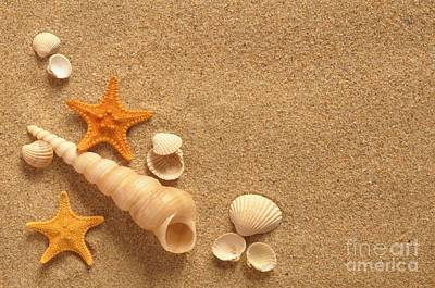 Sea Shell Art Print by Boon Mee