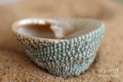 Photograph - Sea Shell In Aquamarine by Ella Kaye Dickey