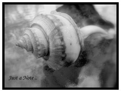 Photograph - Sea Shell Notecard by Margie Avellino