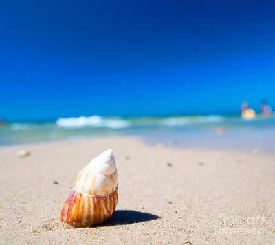 Life Photograph - Sea Shell On The Beach by Michal Bednarek