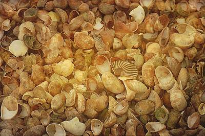 Seashells Red River Beach Harwich Cape Cod Ma Art Print by Suzanne Powers