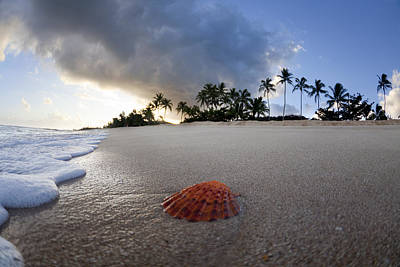 Beach Ocean Photograph - Sea Shell Sunrise by Sean Davey