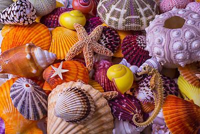 Sea Shell Treasures Art Print by Garry Gay