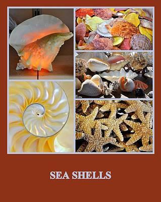Photograph - Sea Shells by AJ  Schibig
