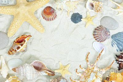 Sea Shells Art Print