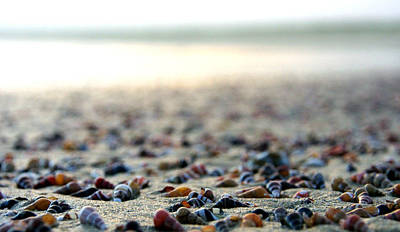 Sea Shells By The Sea Shore Print by Kaleidoscopik Photography