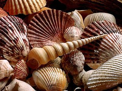 Sea Shells Art Print by Cole Black