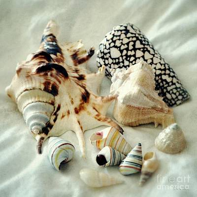 Photograph - Sea Shells- Colorful Collection by Darla Wood