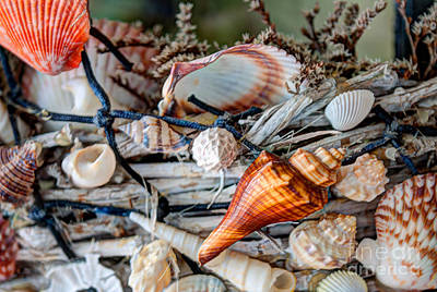 Photograph - Sea Shell Basket by Dale Powell