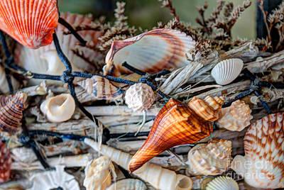 Sea Shell Basket Art Print by Dale Powell
