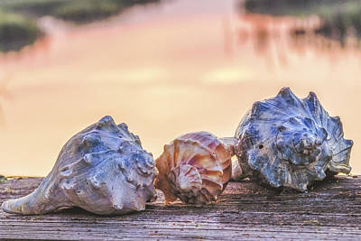 Photograph - Sea Shells Image Art by Jo Ann Tomaselli