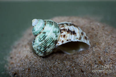 Photograph - Sea Shells Ocean Green by Ella Kaye Dickey