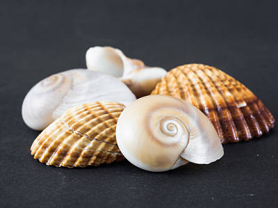 Sea Shells On A Black Background Art Print