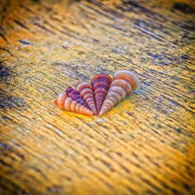 Sea Shells Art Print by Stelios Kleanthous