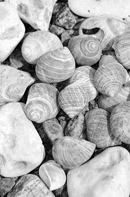 Sea Shells Original by Tommytechno Sweden