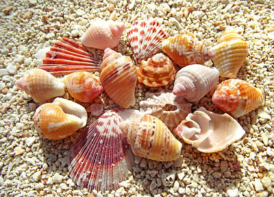 Photograph - Sea Shells Upclose 3 by Duane McCullough