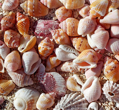 Photograph - Sea Shells Upclose 4 by Duane McCullough