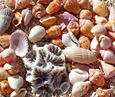 Photograph - Sea Shells Upclose 5 by Duane McCullough